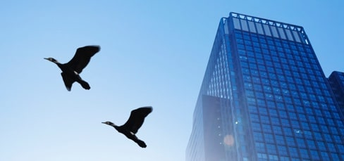 Blue sky with birds flying and city building in background