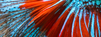Colorful picture of a fish tail.