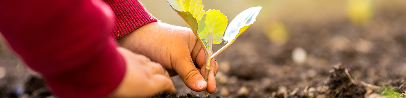 Closeup photo of a child planting a plant.